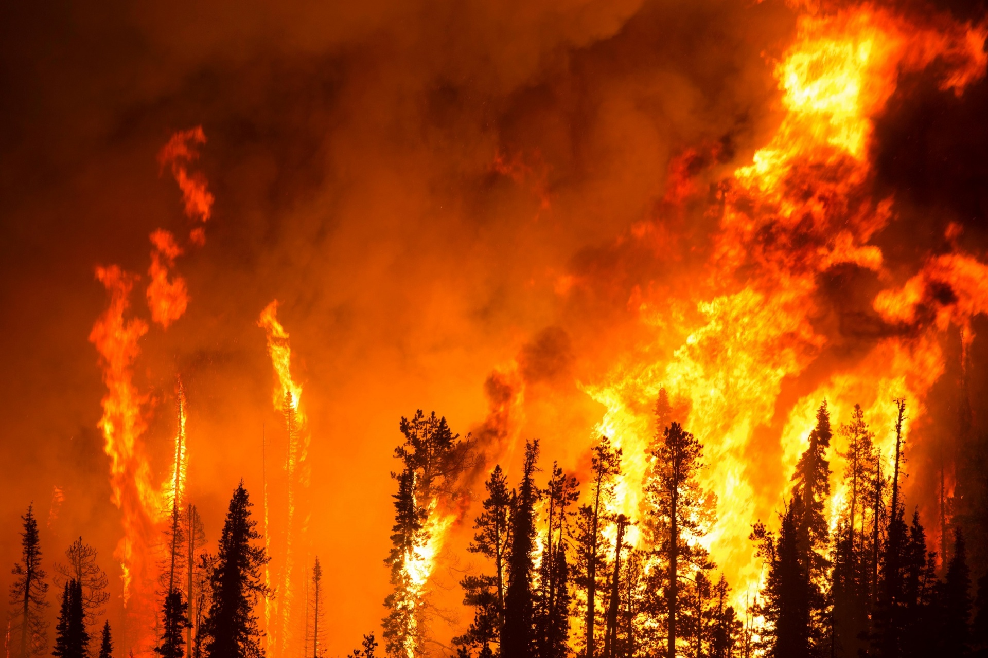 Raging wildfire burning a forest