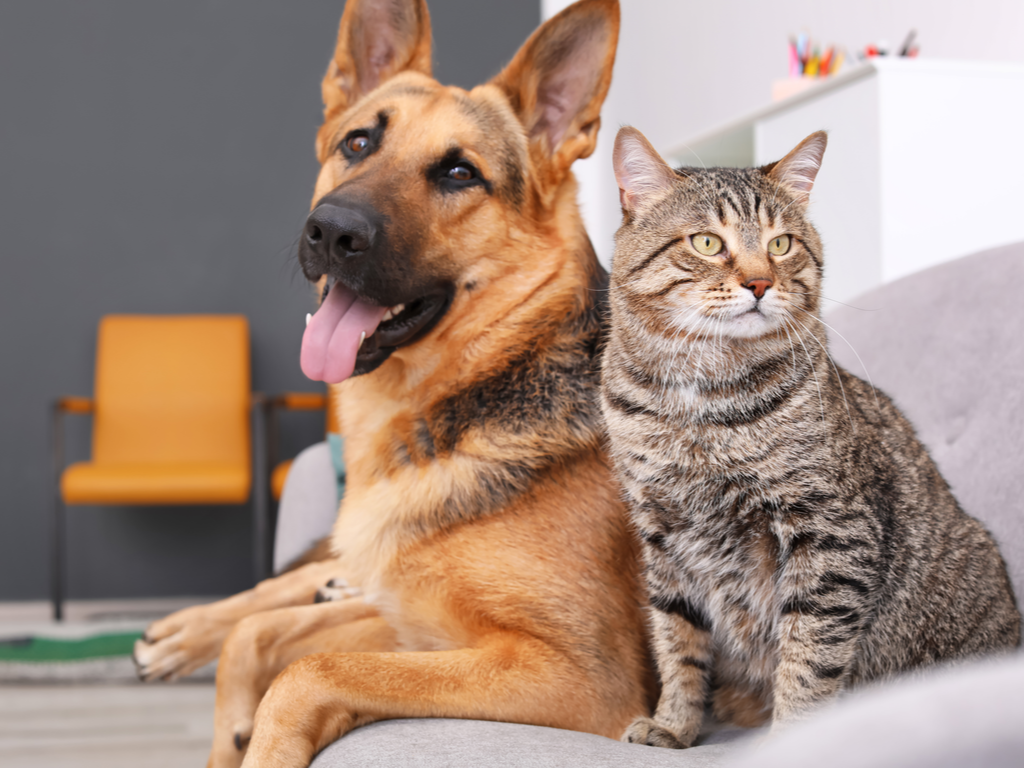 dog sitting next to a cat